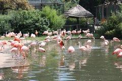 Flamingo's Royalty-vrije Stock Afbeelding