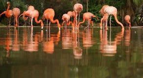 Flamingo's in aard stock foto's