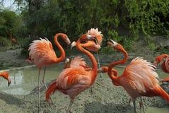 Flamingo's bij de dierentuin in Wenen Stock Afbeeldingen
