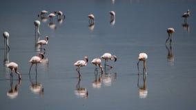 Flamingo's bij Meer Magadi, Rift Valley, Kenia stock foto's