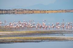 Flamingo's bij Meer Magadi, Rift Valley, Kenia stock afbeeldingen