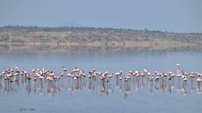 Flamingo's bij Meer Magadi, Rift Valley, Kenia royalty-vrije stock fotografie