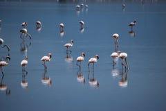 Flamingo's bij Meer Magadi, Rift Valley, Kenia stock fotografie