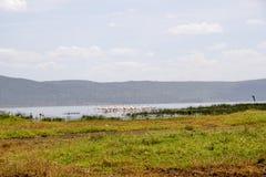 Flamingo's bij Meer Nakuru, Rift Valley, Kenia stock foto