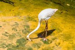 Flamingo's in de lagune Stock Afbeelding