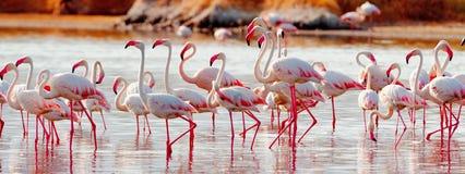 Flamingo's dichtbij Bogoria-Meer, Kenia Royalty-vrije Stock Fotografie