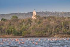 Flamingo's die door een kerk vliegen Stock Fotografie