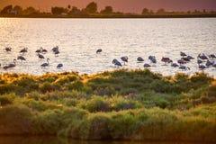 Flamingo's in Ebro Deltaaardpark, Tarragona, Catalunya, Spanje Exemplaarruimte voor tekst Stock Afbeeldingen