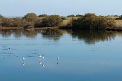 Flamingo's en andere vogels die in water rusten Royalty-vrije Stock Fotografie