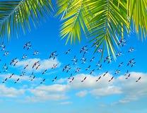 Flamingo's en palm stock fotografie