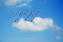 Flamingo's en zachte wolk stock afbeeldingen