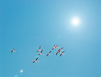 Flamingo's en zon royalty-vrije stock foto