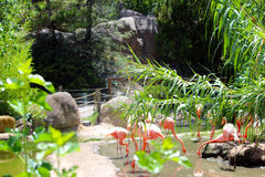 Flamingo's Hideout. A hideout for flamingos with a cave nearby Royalty Free Stock Image