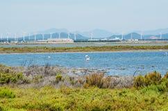 Flamingo's naast Cagliari, Sardinige Royalty-vrije Stock Fotografie