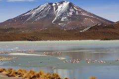 Flamingo's op meer, Bolivië Stock Afbeelding