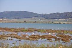 Flamingo's op meer, Fuente del Piedra. stock foto's