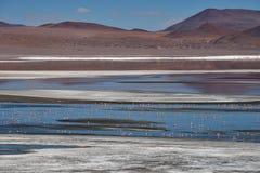 Flamingo's in Rode Laguna Colorada Royalty-vrije Stock Afbeelding