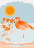 Flamingo scene Stock Photos