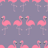 Flamingo Seamless Pattern Exotic tropical bird. Zoo animal collection. Cute cartoon character. Decoration element. Violet backgrou Royalty Free Stock Image