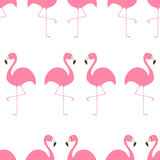 Flamingo Seamless Pattern Exotic tropical bird. Zoo animal collection. Cute cartoon character. Decoration element. White backgroun Stock Photography