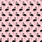 Flamingo seamless pattern on pink background. Royalty Free Stock Images