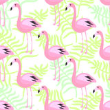 Flamingo seamless pattern. Pink exotic bird background. Royalty Free Stock Images