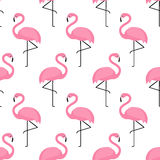 Flamingo seamless pattern on white background. Royalty Free Stock Photo