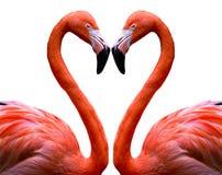 flamingo serce Zdjęcie Stock