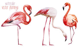 Flamingo set Royalty Free Stock Image