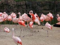 Flamingo'shabitat Royalty-vrije Stock Fotografie