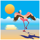 Flamingo on the shore Royalty Free Stock Images