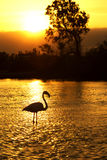 Flamingo Silhouette. Silhouette of a flamingo wading in water at sunset Stock Images