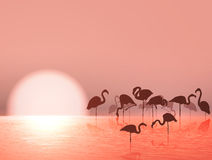 Flamingo Silhouette and Sunset Royalty Free Stock Photography