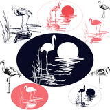 Flamingo Silhouettes Royalty Free Stock Image