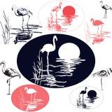 Flamingo Silhouettes Royalty Free Stock Image