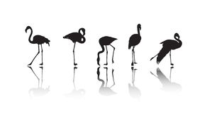 Flamingo silhouettes Royalty Free Stock Photo