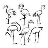 Flamingo, sketch for your design Stock Photo