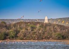Flamingo som flyga iväg en kyrka Arkivbilder