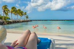 Flamingo'sstrand in Aruba Het jonge Rusten van de Vrouw Stock Foto