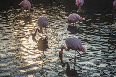 Flamingo Standing on Water during Daytime Stock Photo