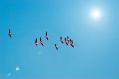 Flamingo'stroep royalty-vrije stock fotografie