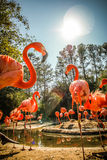 Flamingo sunbathing Royalty Free Stock Image