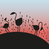 Flamingo on sunset. 3 silhouettes of birds of flamingo on a background sunset in a grass Stock Photos