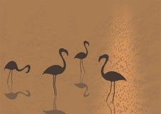 Flamingo on sunset Royalty Free Stock Photos