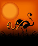 Flamingo in the sunset. Kind of Urban Art Flamingo in the sunset between black and orange color Royalty Free Stock Image