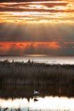 Flamingo at sunset Stock Photos