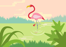 Flamingo swamp habitat flat cartoon vector wild animals birds. Flamingo in swamp river lake habitat flat design cartoon vector wild animals birds. Flat zoo Stock Photography