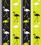 Flamingo texture Royalty Free Stock Image