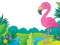 Flamingo topic image 3 Stock Photography