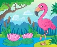 Flamingo topic image 4 Stock Image